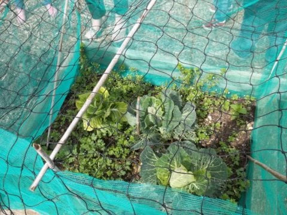 Term 5 Week 1 & 2 – Mini-beasts & Growing